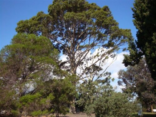 Moonee Valley add a further 416 trees to their Significant Tree Register